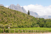 Hottentots-Holland Mountains towering above vineyards — Stock Photo
