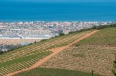 Vineyards with Somerset West and Gordons Bay in the back — Stock Photo