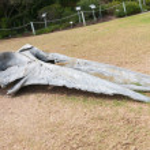 Testa di uno scheletro di balena — Foto Stock #74570105
