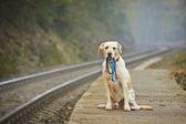 Собака на железнодорожной платформе — Стоковое фото