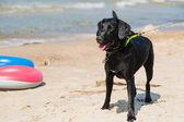 Dog on a beach — Stock Photo