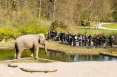 Elephants in Copenhagen Zoological Garden — Stock Photo