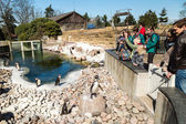 Penguins in Copenhagen Zoological Garden — Stock Photo