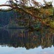 Pine branch over the lake at sunset — Stock Photo #73353975