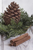 Fir Cone and needle branch — Stock Photo