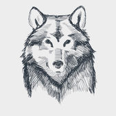 Wolf head grunge hand drawn sketch vector illustration — Stock Vector