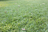 Green lawn. — Stock Photo