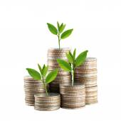 Silver Thailand coins stack isolated and green treetop. — Stock Photo