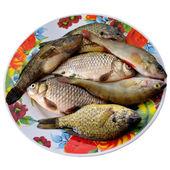 Peixe fresco. — Fotografia Stock