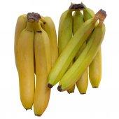 Banana  Tropical. — Stock Photo