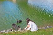 Teenager Feeds Black Swans — Stock Photo