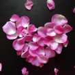 Petals of pink roses in heart shape on black — Stock Photo #65955359