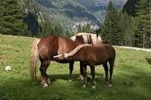 Horse nursing — Stock Photo