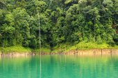 Tropical rainforest at Kenyir Lake — Stock Photo