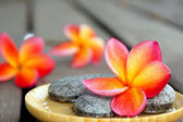 Red frangipani flower with stones — Stock Photo
