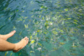 Feeding the reef fishes — Stock Photo