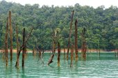 Dead trees at tropical rainforest — Stock Photo