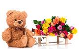 Teddybär und rosen — Stockfoto