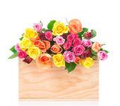 Roses en boîte isolé sur blanc — Photo