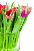 Tulips in vase on white — Stock Photo