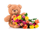 Roses and teddy bear — Stock Photo