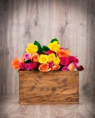 Colorful Roses in the box — Stock Photo