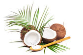 Coconuts and halves of coconut — Stock Photo