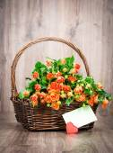 バラの花の花束 — ストック写真