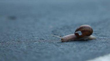 Tiny snail crawling through asphalt road — Stock Video