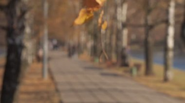 Fall landscape at Moscow — Stockvideo