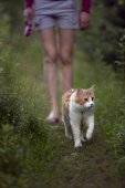 Red cat walks across the lawn — Stock Photo