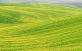 Field — Zdjęcie stockowe