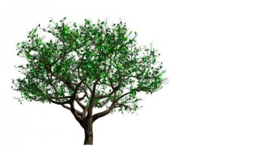 Tree. From Spring To Autumn — Vídeo de Stock