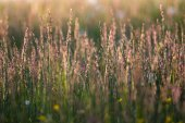 Vysoké trávy na slunce nastavit čas — Stock fotografie