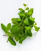 Mint herb — Stock Photo