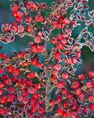 Frutas vermelhas congeladas — Fotografia Stock
