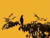 Birds perching at a tree — Stock Photo
