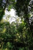 热带丛林 — 图库照片