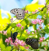 Colorful and beautiful butterflies — Stock Photo