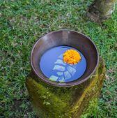 Flowers on pot — Stock Photo