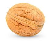 Walnut — Stock fotografie
