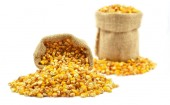 Corn in the bag — Foto Stock