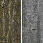 Tree bark — Stock Photo #69195679