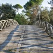 Old wooden bridge over the channel of San Rossore Regional Park, Italy — Stock Photo #58373599
