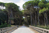 Road through San Rossore Regional Park, Italy — Stok fotoğraf