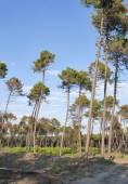 Toscana skogslandskap — Stockfoto