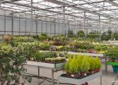 Shop for greenhouse cultivation and sale of indoor plants — Stock Photo