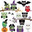 Vector Collection of Spooky Halloween Owls — Stock Vector #51923045