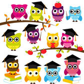 Vector Collection of School or Graduation Themed Owls — Stock Vector