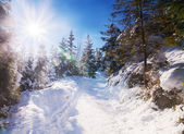 Snowy view in Tatra Mountains — Stock Photo